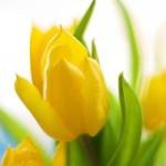 Обычай «бить весну»