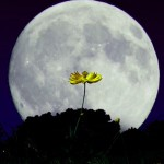 Праздник Луны или Чжунцю